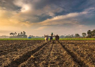 शेती : एक संधी